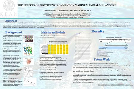 THE EFFECTS OF PHOTIC ENVIRONMENT ON MARINE MAMMAL MELANOPSIN Vanessa Ortiz 1*, April Triano 2* and Jeffry I. Fasick, Ph.D 1 B.S Biology (Biotechnology.