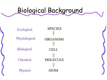 Biological Background ATOM MOLECULE CELL ORGANISM SPECIES Physical Chemical Biological Physiological Ecological.