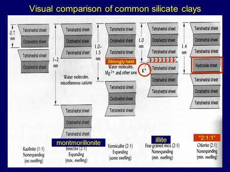 "Visual comparison of common silicate clays illite montmorillonite ""2:1:1"" Strongly held."