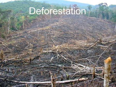 Deforestation. Results by 2050 Loss of 97% of the Earth's old-growth forests; Loss of 84% of the tropical rainforests (about 47 million square kilometers);