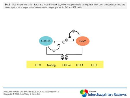 Sox2 : Oct-3/4 partnership. Sox2 and Oct-3/4 work together cooperatively to regulate their own transcription and the transcription of a large set of downstream.
