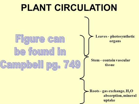 PLANT CIRCULATION Leaves - photosynthetic organs Stem - contain vascular tissue Roots - gas exchange, H 2 O absorption, mineral uptake.
