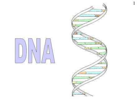 1. DNA stands for deoxyribose nucleic acid This chemical substance is present in the nucleus of all cells in all living organisms DNA controls all the.
