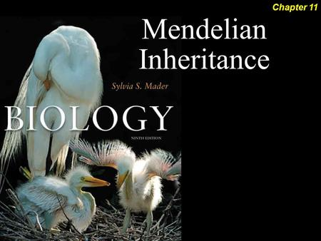 Mendelian Inheritance Chapter 11. Mendelian Inheritance 2Outline Blending Inheritance Monohybrid Cross  Law of Segregation Modern Genetics  Genotype.