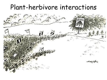 Plant-herbivore interactions. The green earth paradox Why don't predators win? Why is the earth green?
