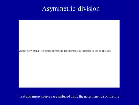 Asymmetric division Text and image sources are included using the notes function of this file.