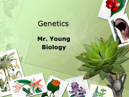 Genetics Mr. Young Biology Mr. Young Biology. Heredity Heredity – characteristics inherited from parents to offspring through genes.