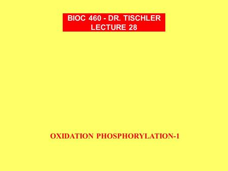 OXIDATION PHOSPHORYLATION-1 BIOC 460 - DR. TISCHLER LECTURE 28.