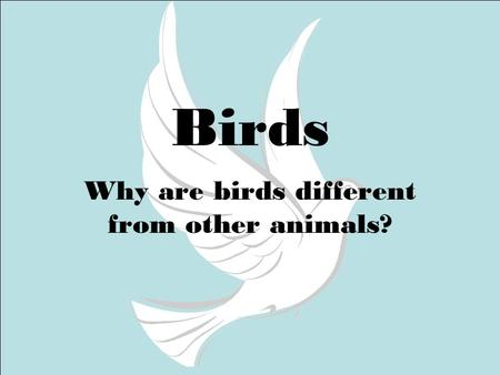 Birds Why are birds different from other animals?.