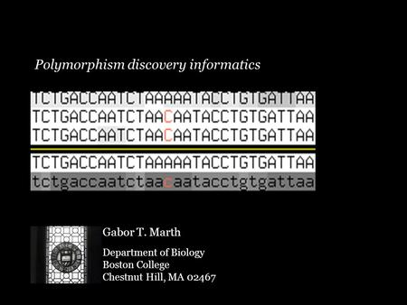 Polymorphism discovery informatics Gabor T. Marth Department of Biology Boston College Chestnut Hill, MA 02467.