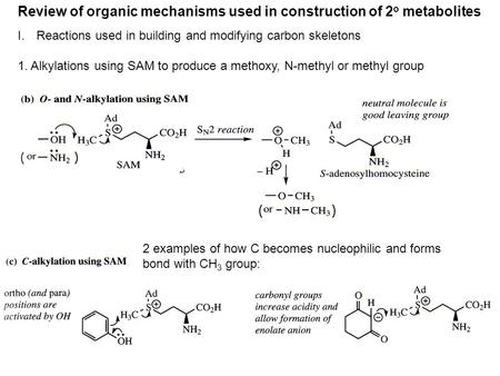 Review of organic mechanisms used in construction of 2 o metabolites I.Reactions used in building and modifying carbon skeletons 1. Alkylations using SAM.