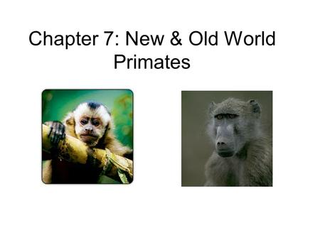 Chapter 7: New & Old World Primates. Prosimians (before apes) More primitive features as compared to monkeys –Many are nocturnal –Some have claws –Locomotion.