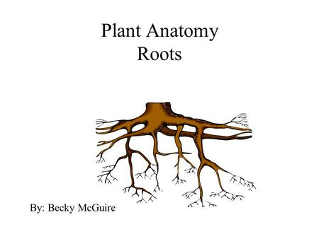 Plant Anatomy Roots By: Becky McGuire. Plant Layout A. Roots B. Stems C. Leaf D. Flower.