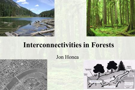 Interconnectivities in Forests Jon Honea. What is important about a forest?