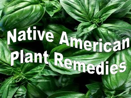 When the settlers arrived to the New World, they learned how to use common plants in their folk medicines from the Native Americans. The Indians also.