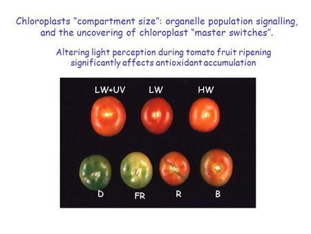 "Altering light perception during tomato fruit ripening significantly affects antioxidant accumulation LW+UVLWHW D FR RB Chloroplasts ""compartment size"":"