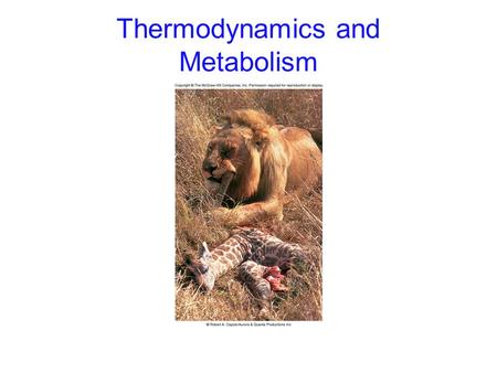 Thermodynamics and Metabolism. 2 Metabolism Metabolism: all chemical reactions occurring in an organism Anabolism: chemical reactions that expend energy.