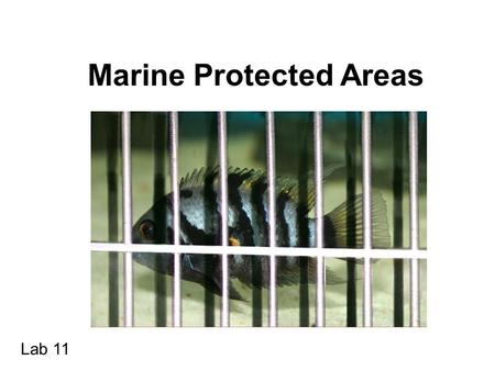 Marine Protected Areas Lab 11. WWF Definition: A marine protected area is an area designated to protect marine ecosystems, processes, habitats and species.