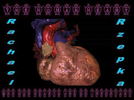 The heart is actually located in the middle of the chest near the lungs, not the left where you would place your hand over your heart. The heart is tipped.