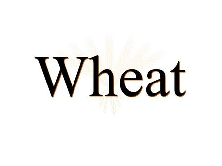 Wheat. Kim's web site for wheat market information agecon.okstate.edu/anderson.