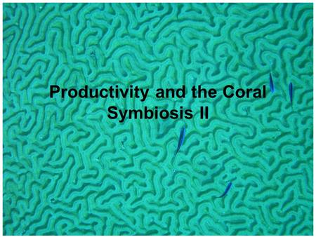 Productivity and the Coral Symbiosis II. Polyp can survive extended periods with no external food source Tight internal N-cycling and algal PS.