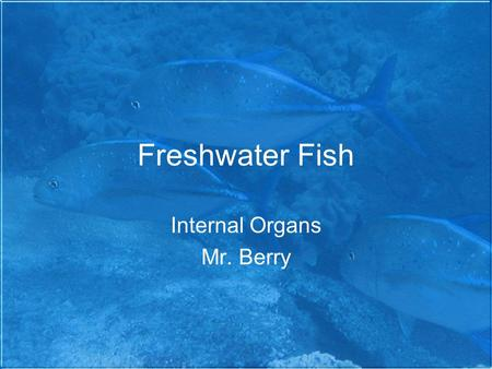 Freshwater Fish Internal Organs Mr. Berry. Internal Anatomy  atomy.html#internal.