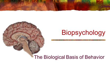 Biopsychology The Biological Basis of Behavior. Neurons: Structure Dendrites Cell Body Axon Myelin Sheath Nodes of Ranvier Terminal Buttons p. 45.