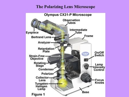 The Polarizing Lens Microscope. Reticle Scale Objective4X4X 10 X 40 X Scale Bar (mm)2.51.00.25 Lg. Divisions (mm)0.250.10.025 Sm. Divisions (mm)0.050.020.005.