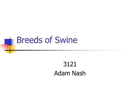 Breeds of Swine 3121 Adam Nash Landrace Originated in Denmark Drooped ears Known for their maternal instincts White Long Flatter-topped than other breeds.