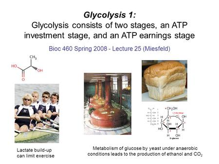 Glycolysis 1: Glycolysis consists of two stages, an ATP investment stage, and an ATP earnings stage Bioc 460 Spring 2008 - Lecture 25 (Miesfeld) Lactate.