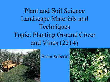 Plant and Soil Science Landscape Materials and Techniques Topic: Planting Ground Cover and Vines (2214) Brian Sobecki.