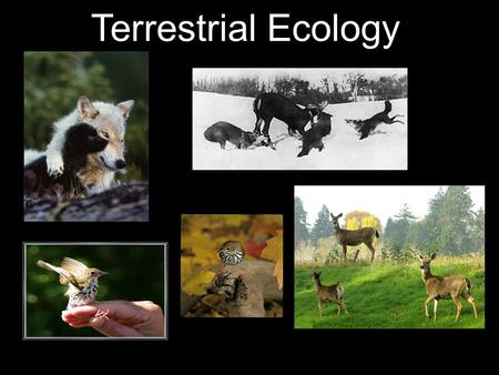 Terrestrial Ecology. How does variation in niche act as a basis for natural selection? For natural selection to work you need: → variation within a population.