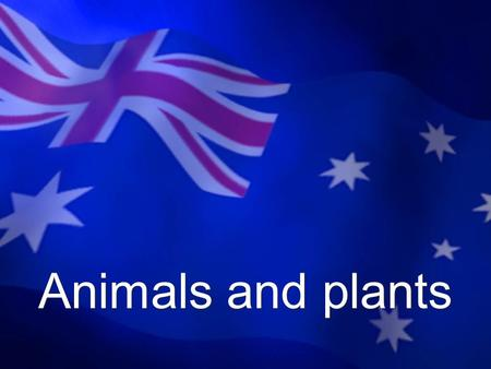 Animals and plants. Kangaroo The kangaroo lives only in Australia Symbol of the Australian continent.