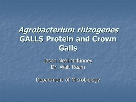 Agrobacterium rhizogenes GALLS Protein and Crown Galls Jason Neal-McKinney Dr. Walt Ream Department of Microbiology.