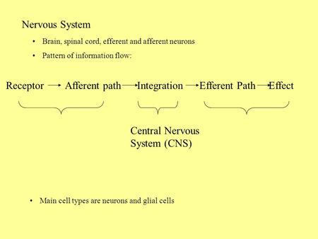 Nervous System Brain, spinal cord, efferent and afferent neurons Pattern of information flow: Receptor Afferent path Integration Efferent Path Effect Central.