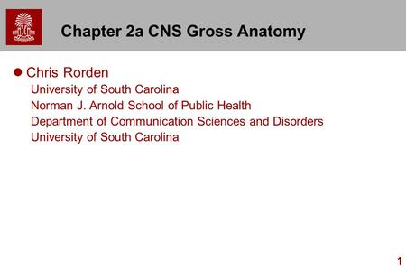 1 Chapter 2a CNS Gross Anatomy Chris Rorden University of South Carolina Norman J. Arnold School of Public Health Department of Communication Sciences.