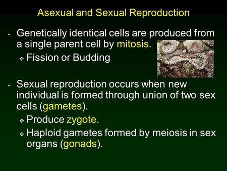 Asexual and Sexual Reproduction Genetically identical cells are produced from a single parent cell by mitosis.  Fission or Budding Sexual reproduction.