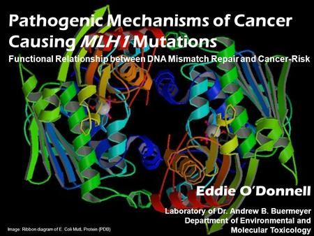 Pathogenic Mechanisms of Cancer Causing MLH1 Mutations Functional Relationship between DNA Mismatch Repair and Cancer-Risk Eddie O'Donnell Laboratory of.