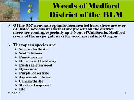 Click to edit Master title style 7/15/20151 Weeds of Medford District of the BLM  Of the 357 non-native plants documented here, there are over 30 listed.