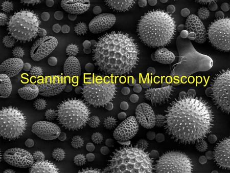 Scanning Electron Microscopy. Applications of SEM Visualizing smaller resolutions than visible microscopy can (resolutions of ~25Å are possible) 130,000x.