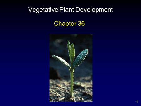 1 Vegetative Plant Development Chapter 36. 2 Angiosperm Embryo Development.
