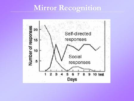 Mirror Recognition. Gender Development.