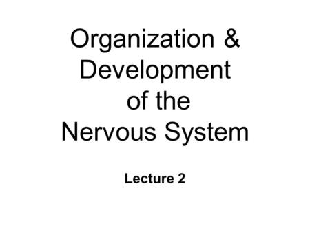 Organization & Development of the Nervous System Lecture 2.