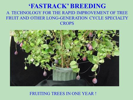 A novel technology for speeding the improvement of germplasm and varieties of tree fruits and other long-generation cycle crops. 'FASTRACK' BREEDING A.