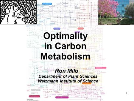 1 Optimality in Carbon Metabolism Ron Milo Department of Plant Sciences Weizmann Institute of Science.