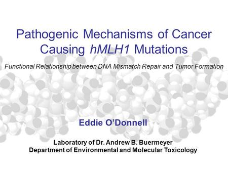 Pathogenic Mechanisms of Cancer Causing hMLH1 Mutations Functional Relationship between DNA Mismatch Repair and Tumor Formation Eddie O'Donnell Laboratory.