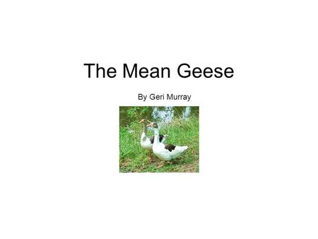 The Mean Geese By Geri Murray. Scat went to the creek with her kittens. Near the stream were big geese. The geese said Honk!