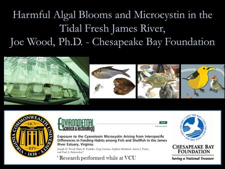 Harmful Algal Blooms and Microcystin in the Tidal Fresh James River, Joe Wood, Ph.D. - Chesapeake Bay Foundation *Research performed while at VCU.