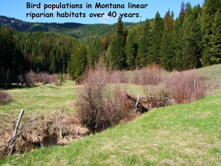 Bird populations in Montana linear riparian habitats over 40 years.