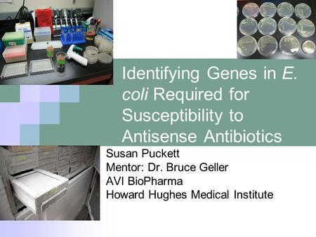 Identifying Genes in E. coli Required for Susceptibility to Antisense Antibiotics Susan Puckett Mentor: Dr. Bruce Geller AVI BioPharma Howard Hughes Medical.